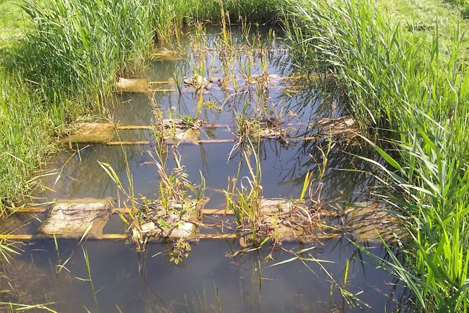 A photograph of a wetland.